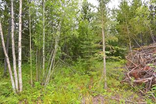 Photo 14: DL 1335A 37 Highway: Kitwanga Land for sale (Smithers And Area (Zone 54))  : MLS®# R2471833