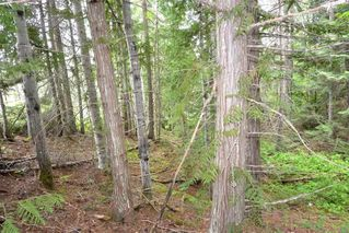 Photo 10: DL 1335A 37 Highway: Kitwanga Land for sale (Smithers And Area (Zone 54))  : MLS®# R2471833