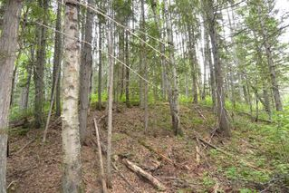 Photo 13: DL 1335A 37 Highway: Kitwanga Land for sale (Smithers And Area (Zone 54))  : MLS®# R2471833