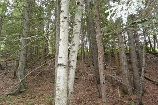 Photo 11: DL 1335A 37 Highway: Kitwanga Land for sale (Smithers And Area (Zone 54))  : MLS®# R2471833
