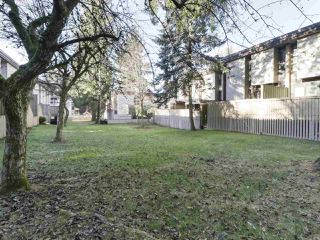 Photo 17: 114 13806 103 Avenue in Surrey: Whalley Townhouse for sale (North Surrey)  : MLS®# R2422802