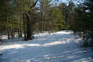 Photo 6: 7650 Birch Drive in Ramara: Freehold for sale (X17: ANTEN MILLS)  : MLS®# X1722198
