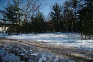 Photo 4: 7650 Birch Drive in Ramara: Freehold for sale (X17: ANTEN MILLS)  : MLS®# X1722198