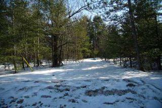 Photo 5: 7650 Birch Drive in Ramara: Freehold for sale (X17: ANTEN MILLS)  : MLS®# X1722198