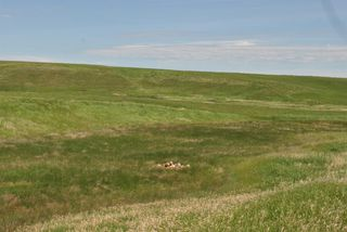 Photo 10: Range Road 16.4: Rural Starland County Land for sale : MLS®# A1049456