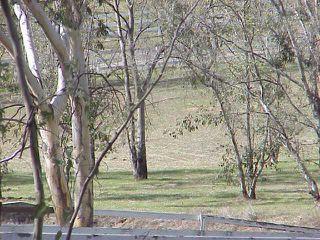 Photo 6: RAMONA Lot / Land for sale: 24902 RANCHO SANTA TERESA