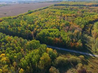Photo 12: 0 RGE RD 15 TWP ROAD 552: Rural Lac Ste. Anne County Rural Land/Vacant Lot for sale : MLS®# E4137401