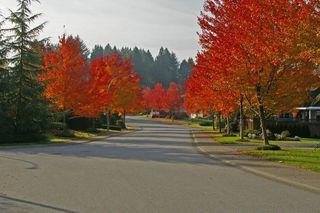 "Photo 15: 4685 215B Street in Langley: Murrayville House for sale in ""Macklin Corners"" : MLS®# R2359127"
