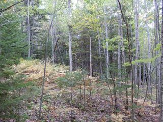Photo 16: Tanner Hill Road in Limerock: 108-Rural Pictou County Vacant Land for sale (Northern Region)  : MLS®# 202020165