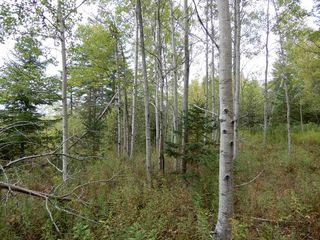 Photo 2: Tanner Hill Road in Limerock: 108-Rural Pictou County Vacant Land for sale (Northern Region)  : MLS®# 202020165