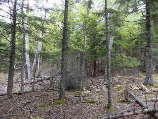 Photo 13: Tanner Hill Road in Limerock: 108-Rural Pictou County Vacant Land for sale (Northern Region)  : MLS®# 202020165