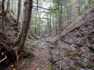 Photo 17: Tanner Hill Road in Limerock: 108-Rural Pictou County Vacant Land for sale (Northern Region)  : MLS®# 202020165