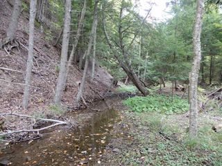Photo 10: Tanner Hill Road in Limerock: 108-Rural Pictou County Vacant Land for sale (Northern Region)  : MLS®# 202020165