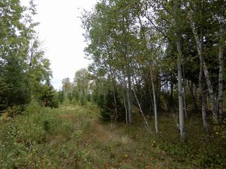 Photo 8: Tanner Hill Road in Limerock: 108-Rural Pictou County Vacant Land for sale (Northern Region)  : MLS®# 202020165