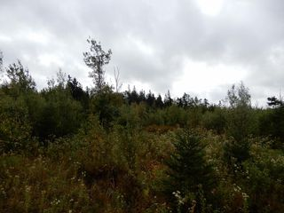 Photo 5: Tanner Hill Road in Limerock: 108-Rural Pictou County Vacant Land for sale (Northern Region)  : MLS®# 202020165