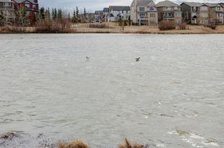 Photo 34: 202 COPPERPOND Bay SE in Calgary: Copperfield Detached for sale : MLS®# C4294623