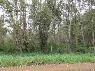Photo 14: RR 253 Twp 620: Rural Westlock County Rural Land/Vacant Lot for sale : MLS®# E4130559
