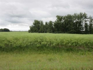 Photo 3: RR 253 Twp 620: Rural Westlock County Rural Land/Vacant Lot for sale : MLS®# E4130559