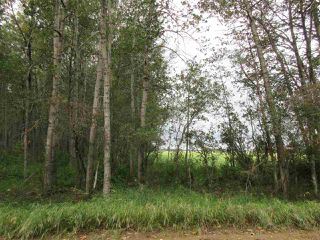 Photo 16: RR 253 Twp 620: Rural Westlock County Rural Land/Vacant Lot for sale : MLS®# E4130559