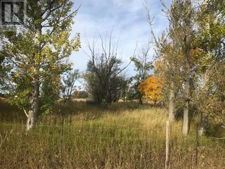 Photo 11: 377 E 3  Avenue N in Magrath: Vacant Land for sale : MLS®# A1036956