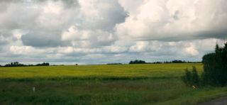Photo 9: 51072 Range Road 243: Rural Leduc County Rural Land/Vacant Lot for sale : MLS®# E4168686