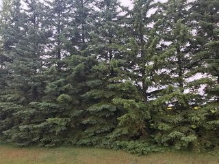 Photo 12: 51072 Range Road 243: Rural Leduc County Rural Land/Vacant Lot for sale : MLS®# E4168686