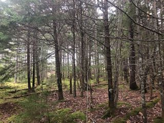 Photo 3: Beaver River Road in Springdale: 401-Digby County Vacant Land for sale (Annapolis Valley)  : MLS®# 202007644