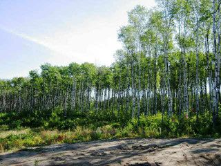 Photo 3: Lot 2 Whitetail Ridge Estates: Rural Bonnyville M.D. Rural Land/Vacant Lot for sale : MLS®# E3394434