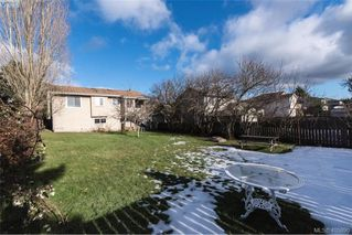 Photo 14: 3516 Calumet Ave in VICTORIA: SE Quadra House for sale (Saanich East)  : MLS®# 806601
