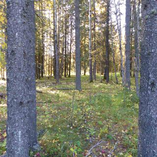 Photo 23: 55001 Twp 465: Rural Wetaskiwin County Rural Land/Vacant Lot for sale : MLS®# E4182412