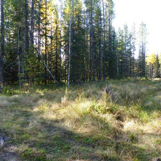 Photo 18: 55001 Twp 465: Rural Wetaskiwin County Rural Land/Vacant Lot for sale : MLS®# E4182412