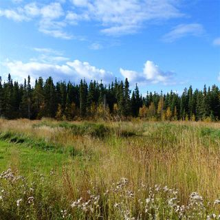 Photo 14: 55001 Twp 465: Rural Wetaskiwin County Rural Land/Vacant Lot for sale : MLS®# E4182412