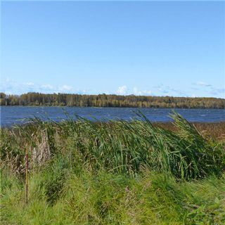 Photo 43: 55001 Twp 465: Rural Wetaskiwin County Rural Land/Vacant Lot for sale : MLS®# E4182412