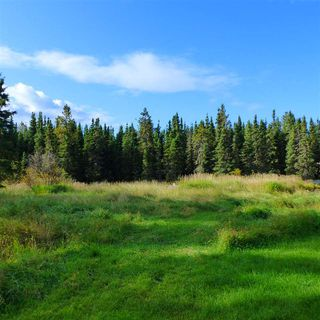 Photo 15: 55001 Twp 465: Rural Wetaskiwin County Rural Land/Vacant Lot for sale : MLS®# E4182412