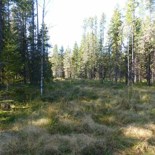 Photo 24: 55001 Twp 465: Rural Wetaskiwin County Rural Land/Vacant Lot for sale : MLS®# E4182412