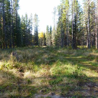 Photo 19: 55001 Twp 465: Rural Wetaskiwin County Rural Land/Vacant Lot for sale : MLS®# E4182412