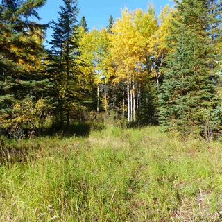 Photo 27: 55001 Twp 465: Rural Wetaskiwin County Rural Land/Vacant Lot for sale : MLS®# E4182412