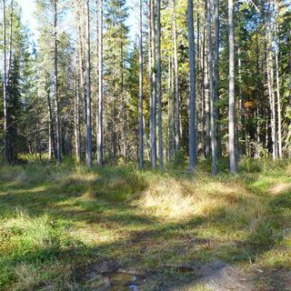 Photo 20: 55001 Twp 465: Rural Wetaskiwin County Rural Land/Vacant Lot for sale : MLS®# E4182412