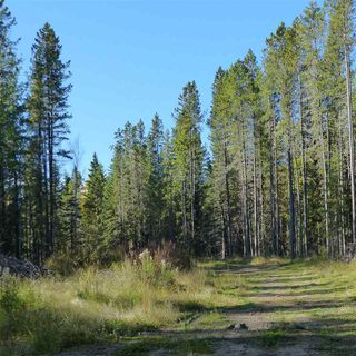 Photo 17: 55001 Twp 465: Rural Wetaskiwin County Rural Land/Vacant Lot for sale : MLS®# E4182412