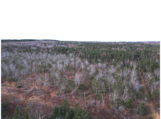 Photo 3: 1963 Gospel Woods Road in Arlington: 404-Kings County Vacant Land for sale (Annapolis Valley)  : MLS®# 202025022