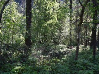 Photo 8: DL4361 DUFFY LAKE ROAD: Lillooet Lots/Acreage for sale (South West)  : MLS®# 152311