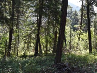 Photo 14: DL4361 DUFFY LAKE ROAD: Lillooet Lots/Acreage for sale (South West)  : MLS®# 152311