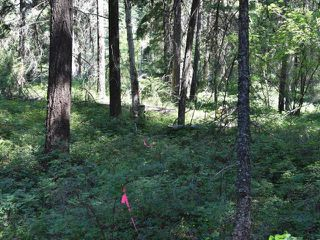 Photo 4: DL4361 DUFFY LAKE ROAD: Lillooet Lots/Acreage for sale (South West)  : MLS®# 152311