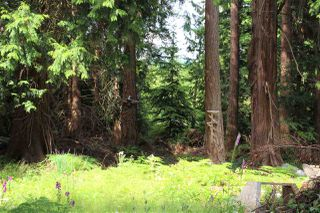 Photo 12: 7984 REDROOFFS Road in Halfmoon Bay: Halfmn Bay Secret Cv Redroofs House for sale (Sunshine Coast)  : MLS®# R2283729
