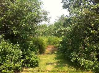 Photo 4: 2.4+/- ACRES MEMORY Lane in Seafoam: 108-Rural Pictou County Vacant Land for sale (Northern Region)  : MLS®# 201809571