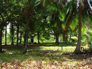 Photo 2: Titled Caribbean Lot for Sale in Panama