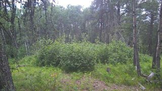 Photo 8: 5 51410 RGE RD 271: Rural Parkland County Rural Land/Vacant Lot for sale : MLS®# E4143959