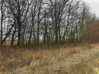 Photo 20: TWP RD 583 Range Rd 271: Rural Westlock County Rural Land/Vacant Lot for sale : MLS®# E4218433