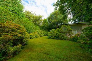 Photo 17: 21867 RIVER Road in Maple Ridge: West Central House for sale : MLS®# R2389328