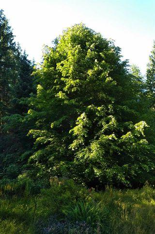 Photo 2: 1418 PARK Avenue: Roberts Creek Land for sale (Sunshine Coast)  : MLS®# R2280200
